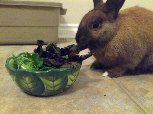 Basil eating