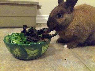Basil eating